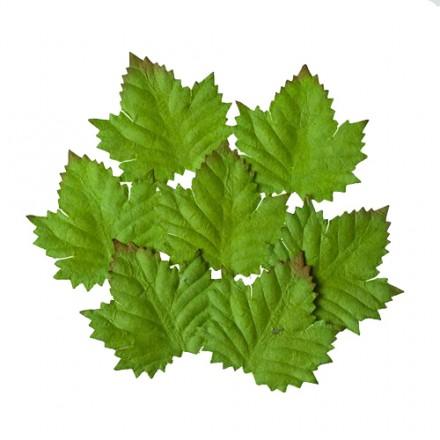 Σετ Διακοσμητικά Φύλλα (Cedar, 7τεμ)