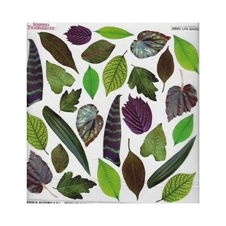 Τυπωμένo φύλλο / Ζελατίνη για Sospeso Trasparente - Leaves