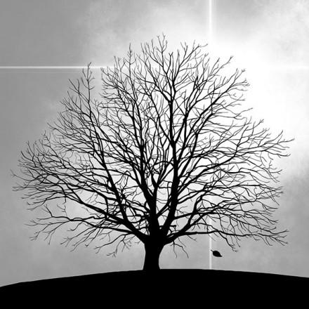Χαρτοπετσέτα για Decoupage, Tree / 13314025