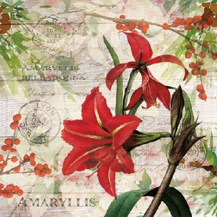 Χριστουγιεννιάτικη Χαρτοπετσέτα για Decoupage, Red Amaryllis / 33310630