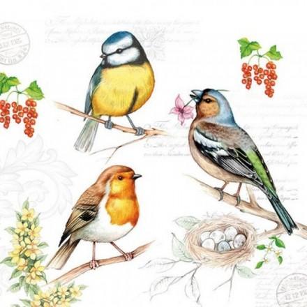 Χαρτοπετσέτα για Decoupage, Birds On Twig / 13311290