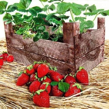 Χαρτοπετσέτα για Decoupage, Strawberry Case / 211628