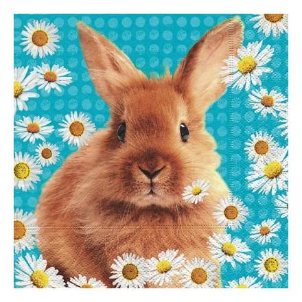 Πασχαλινή Χαρτοπετσέτα για Decoupage, Daisy Rabbit / PD-200001