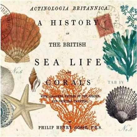 Χαρτοπετσέτα για Decoupage, Sea Life / 133-1576