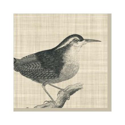 Χαρτοπετσέτα για Decoupage, Botanical Bird 25x25cm / 125-1543
